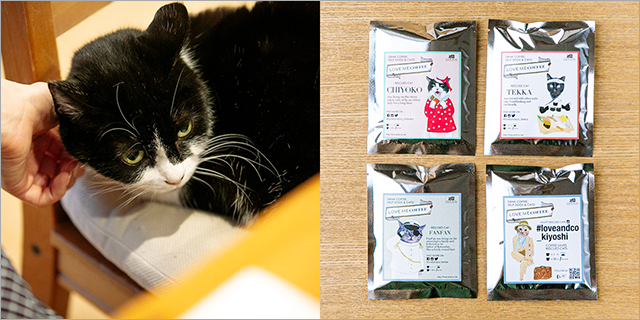 保護猫たちが働く会社「LOVE & Co.」インタビュー