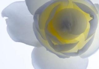 林雅之写真展「Living Flowers」