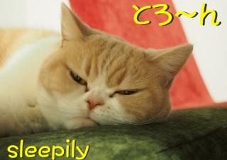 「怒ってなどいない!! 」怒り顔の猫・小雪 フォトコラム Day 12