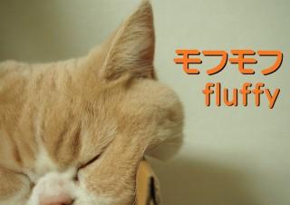 「怒ってなどいない!! 」怒り顔の猫・小雪 フォトコラム Day 14