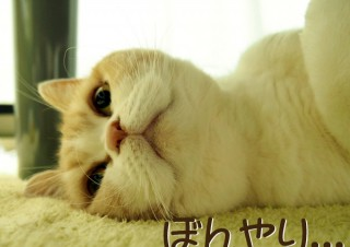「怒ってなどいない!! 」怒り顔の猫・小雪 フォトコラム Day 21