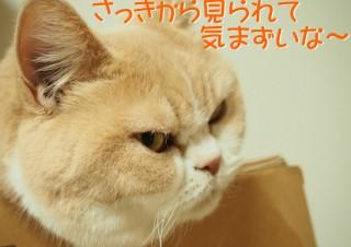 「怒ってなどいない!! 」怒り顔の猫・小雪 フォトコラム Day 23