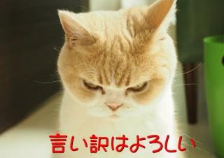 「怒ってなどいない!! 」怒り顔の猫・小雪 フォトコラム Day 28