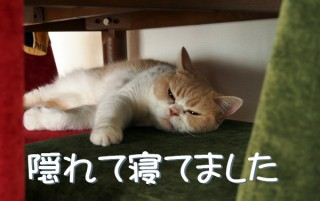 「怒ってなどいない!! 」怒り顔の猫・小雪 フォトコラム Day 30