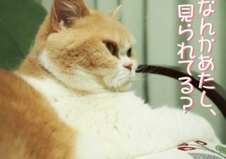 「怒ってなどいない!! 」怒り顔の猫・小雪 フォトコラム Day 35