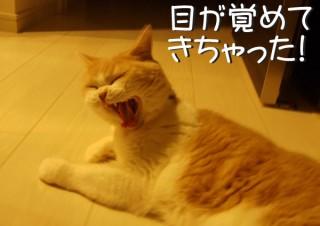 「怒ってなどいない!! 」怒り顔の猫・小雪 フォトコラム Day 38