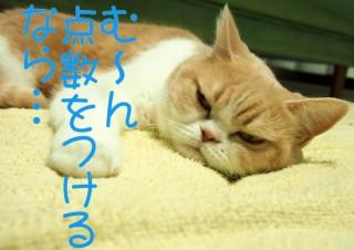 「怒ってなどいない!! 」怒り顔の猫・小雪 フォトコラム Day 41
