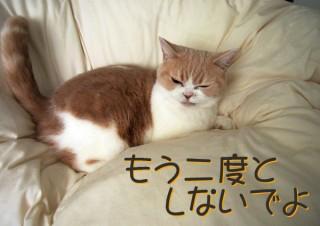 「怒ってなどいない!! 」怒り顔の猫・小雪 フォトコラム Day 46