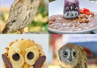 東京都・フクロウがモチーフのスイーツなど提供「フクロウ祭り in ことりカフェ」