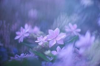 東京都・ボケ味を愛するFacebook写真投稿団体による初の写真展「ボケフォトファン」グループ展