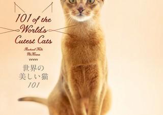 魅力的な世界の猫101匹を紹介しているビジュアル猫図鑑「世界の美しい猫101」