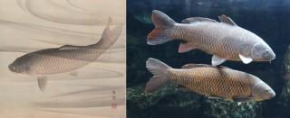 博物館の収蔵品に登場する生物を水族館で見られる連携企画イベント「すいぞくかんとはくぶつかん」