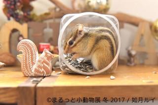 リスやハムスターやハリネズミなど小動物に特化した写真展「まるっと小動物展 冬 2017」
