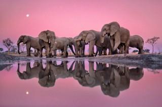 ナショナル ジオグラフィックの作品から厳選された21点を展示する写真展「美しき地球」
