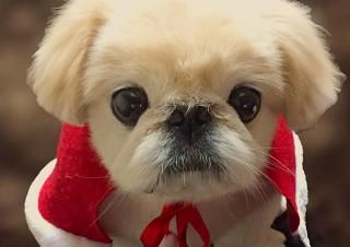 """フレンチブルドッグやパグなど""""鼻ぺちゃ""""の犬に特化した人気の写真展が名古屋でも開催"""
