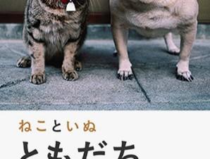 動物写真家として人気の岩合光昭氏による写真展「ねこといぬ ともだち」