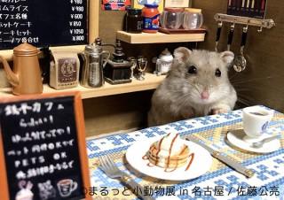 ハムスターやハリネズミやリスなどの小動物に特化した人気の写真展が名古屋で開催