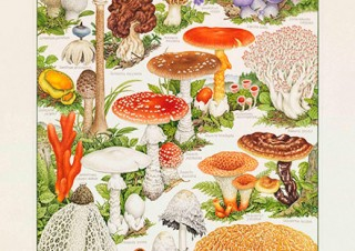 """""""きのこの肖像画""""を描く小林路子氏の展覧会「菌類画の世界~きのこに会いにいきましょう!~」"""
