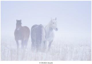 一般人の無断上陸が禁止された無人島で暮らす馬の姿を見られる写真展「ユルリ島の野生馬」