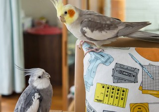 """鳥たちの""""一瞬の美しさ""""をテーマにした作品を集めて展示する「鳥物語トリストーリー展」"""