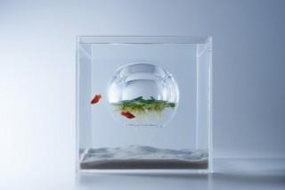 日本デザインセンターが設計に協力!すみだ水族館の新しい展示「waterscape 水の中の風景」