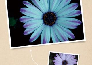花に青味を加えることで、暗く神秘的な印象にする - ともかくカッコイイ写真に仕上げたい!