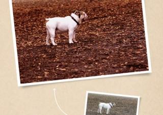 赤味とノイズを加え、犬の力強さを引き出す - ともかくカッコイイ写真に仕上げたい!