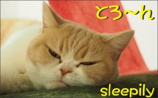 怒り顔の猫 小雪のフォトコラム-目次1