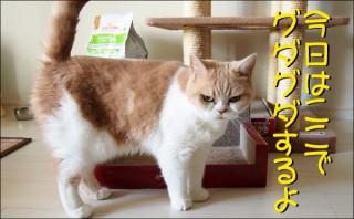 怒り顔の猫・小雪のフォトコラム-目次3