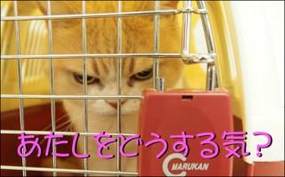 怒り顔の猫・小雪のフォトコラム-目次2