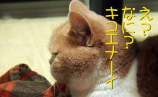 怒り顔の猫・小雪のフォトコラム-目次-4