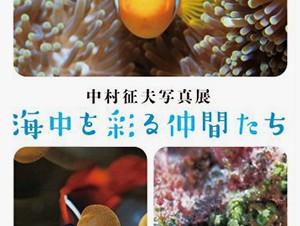 """水中写真家の中村征夫氏による""""命の輝きや美しさ""""に出会える写真展「海中を彩る仲間たち」"""