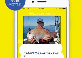 魚の写真を撮るかフォルダの写真を選ぶだけで魚種を判定できるアプリ「フィッシュ」