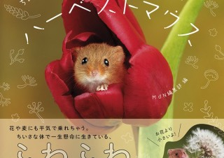 体長たったの5cm! 日本でいちばんちいさいネズミの写真集「ちいさなかわいいハーベストマウス」発売