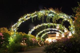 印象派をテーマにした庭園でのライトアップイベント「ジャルダン・デ・ルミエール ~光の庭園~」