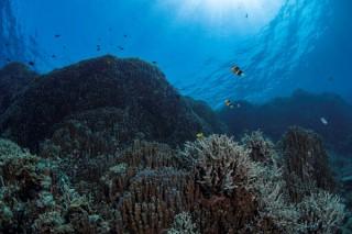 水中写真家の中村卓哉氏による写真展「海と森がつなぐ命 -辺野古-」