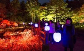 ライトアップされた紅葉と夜のアート作品を楽しめる「ザ・ナイトミュージアム」