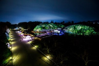 くすのき並木や花壇などが華やかに照らし出される京都府立植物園の「イルミネーション2018」