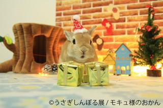 オリジナルのクリスマスツリーも登場する合同写真&物販展「うさぎしんぼる展 in カレッタ汐留」