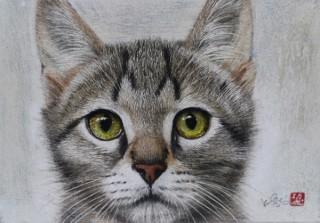 パステルと水彩絵具で猫の毛並みや表情をリアルに表現した市来功成氏の絵画展「君が僕にくれたもの」