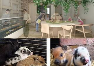動物カフェの最新版はブタカフェ!マイクロブタがトコトコ歩き回る可愛さと癒やし溢れる空間