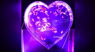 大きなハートの水槽などに多彩な金魚が展示されている「バレンタインアクアリウム」