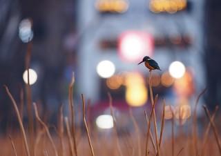 """人の暮らしの中にある""""鳥風景""""を撮影した菅原貴徳氏の写真展「SNAP! BIRDS」"""