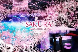 """日常では決して見られない""""満開の桜が広がる海""""を体感できる「SAKURA AQUARIUM」"""