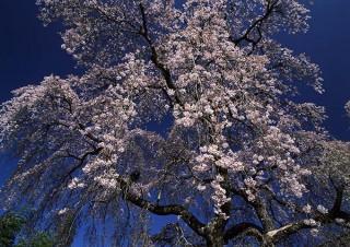 日本の原風景を求めて撮影の旅を続ける風景写真家の竹内敏信氏による個展「日本の桜」