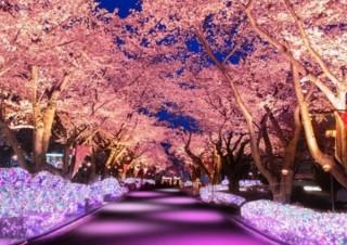 よみうりランド、ライトアップやコースターから夜桜を楽しめるイベントを開催