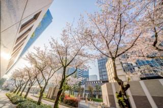 """""""大阪ダイヤモンド地区""""の桜を撮影した写真を募集するフォトコンテストがスタート"""