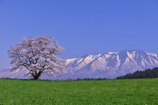日本各地の桜の写真を募集する「春爛漫!ふるさと桜フォトコンテスト2019」