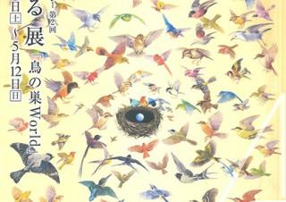 造形的に美しい鳥の巣の実物と絵画を合わせて展示する鈴木まもる氏の個展「鳥の巣World」