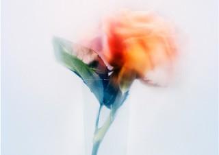 アマナの専属フォトグラファーの宇禄氏による花の写真の展覧会「かさね」